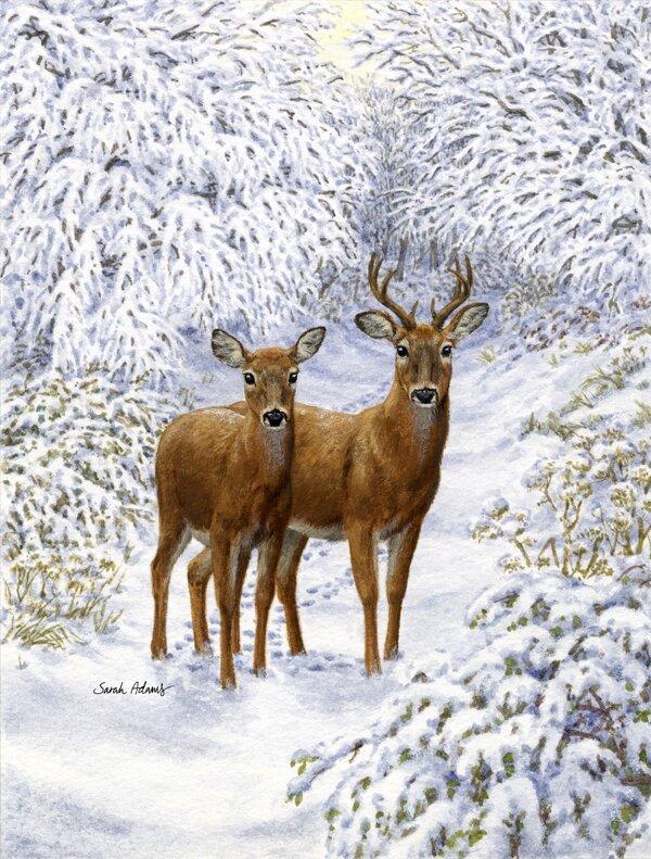Caroline S Treasures Two Deer 2 Sided Polyester 40 X 28 In House Flag Wayfair