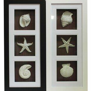 Genial Trendy Seashell Shadow Wall Decor Set (Set Of 2)