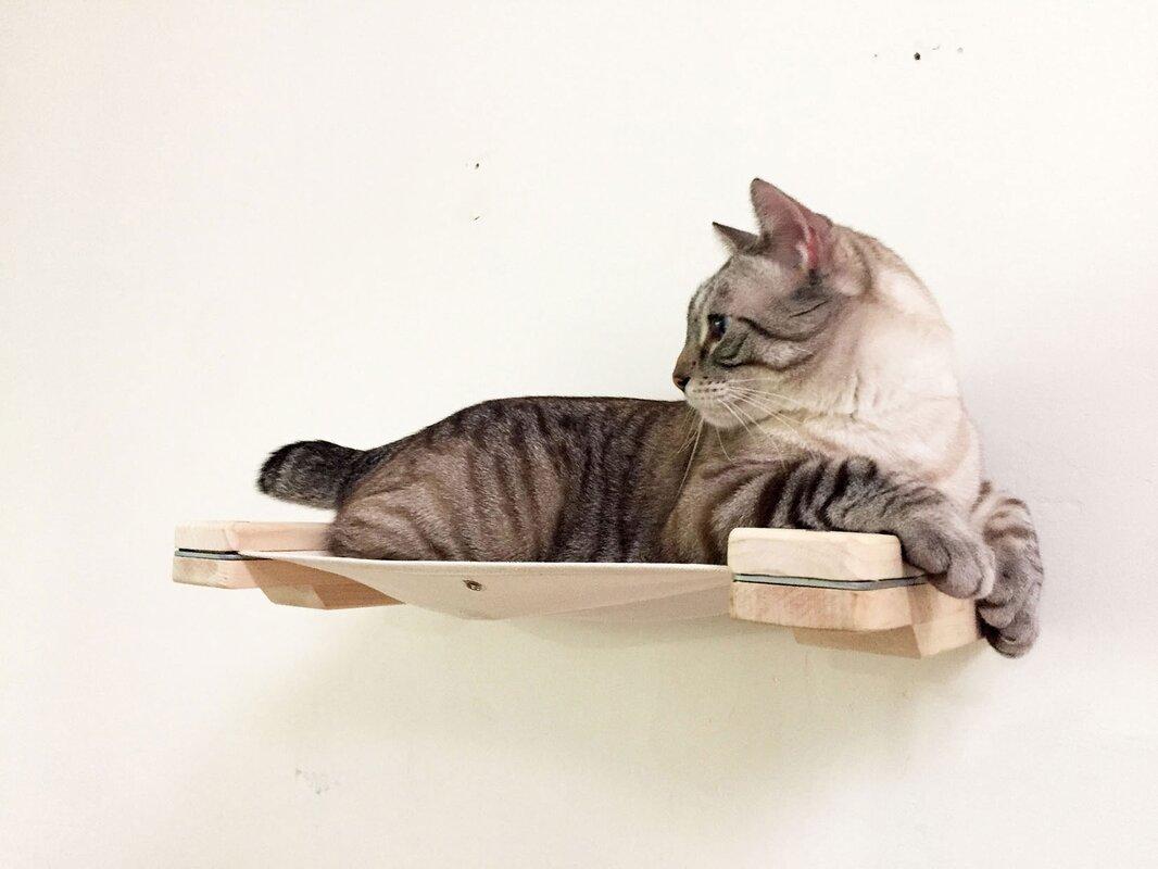 3   mod lounge   cat hammock  u0026 climbing activity center   handcrafted wall mounted catastrophicreations 3   mod lounge   cat hammock  u0026 climbing      rh   wayfair