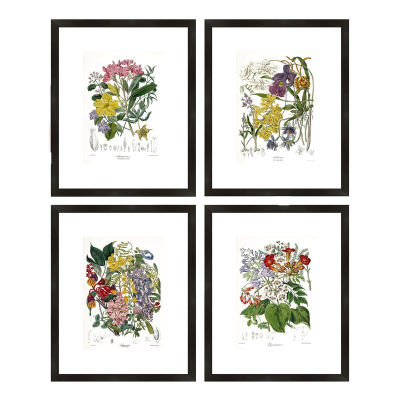 Birch Lane™ Botanical Framed Prints & Reviews | Birch Lane