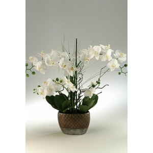 White Orchids in Oval Ceramic Planter
