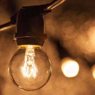 100 ft. 75-Light Globe String Light by Wintergreen Lighting