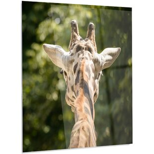 u0027Giraffe Head Back Viewu0027 Photographic Print on Metal. by Design Art  sc 1 st  Wayfair & Giraffe Head Wall Art | Wayfair