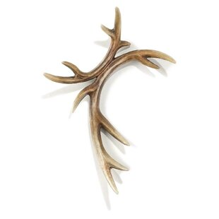 Molded Apprearace of Deer Antlers Wall Decor  sc 1 st  Wayfair & Deer Antlers Wall Decor | Wayfair