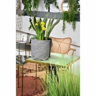 Astra Tissue Plant Pot By Freeport Park