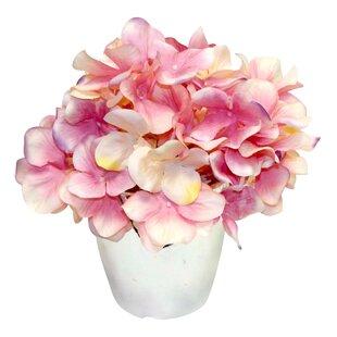 Graceful Hydrangea in Vase