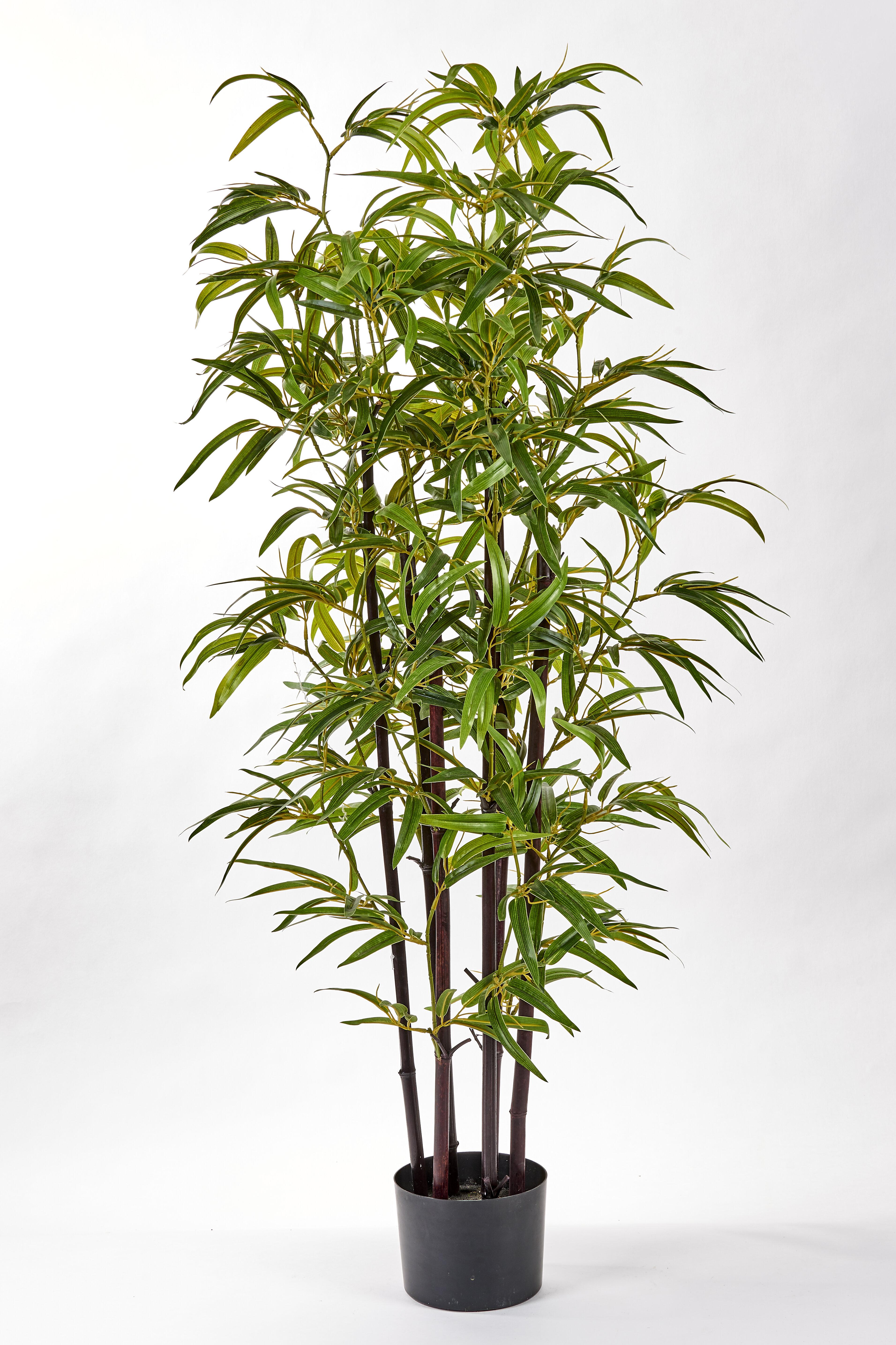 World Menagerie Bamboo Tree In Pot Reviews Wayfair
