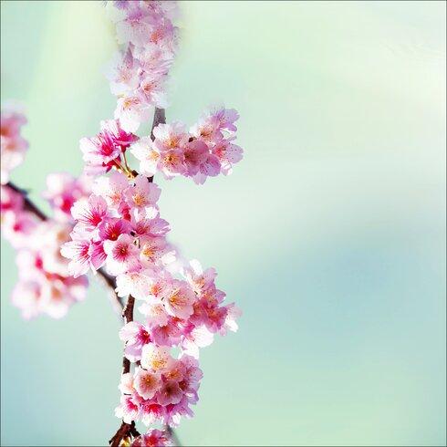 Glasbild Sweet Almond, Kunstdruck