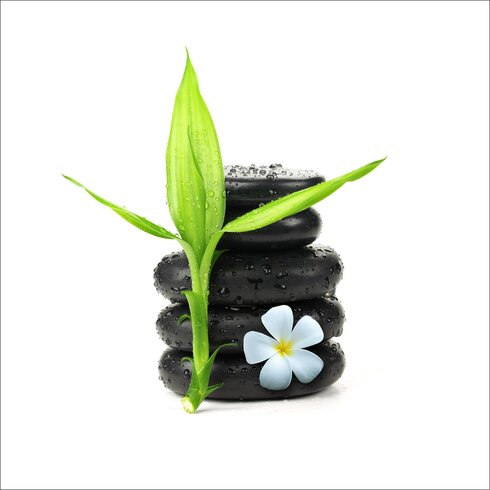 Glasbild Stone & Plant I, Kunstdruck