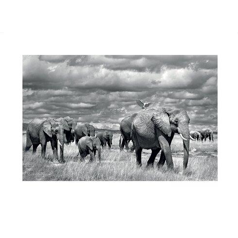 Elephants of Kenya by Marina Cano Photographic Print