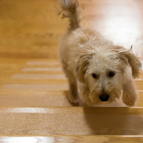 Puppy Self-Adhering Treads