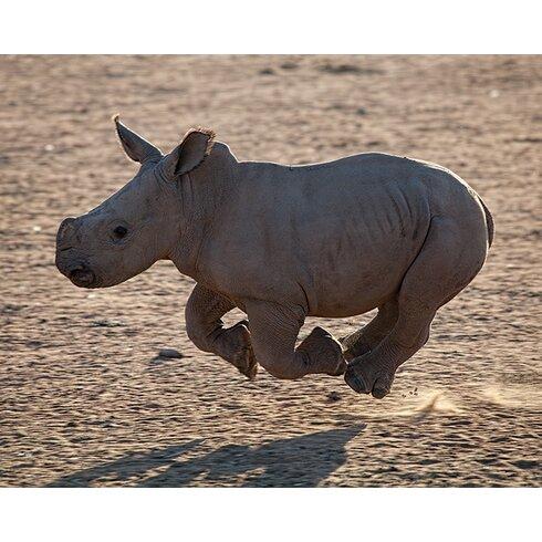 Pete Seaward - Rhino Run Canvas Wall Art