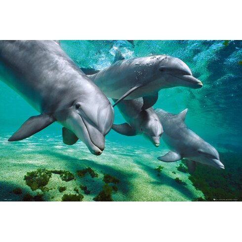 Dolphins Underwater Wall Art
