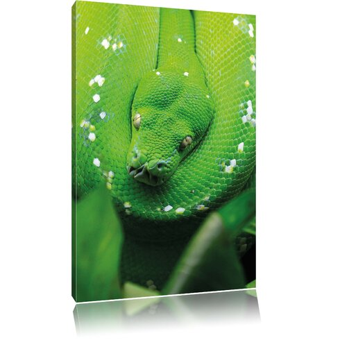 Poisonous Green Snake Photographic Print on Canvas