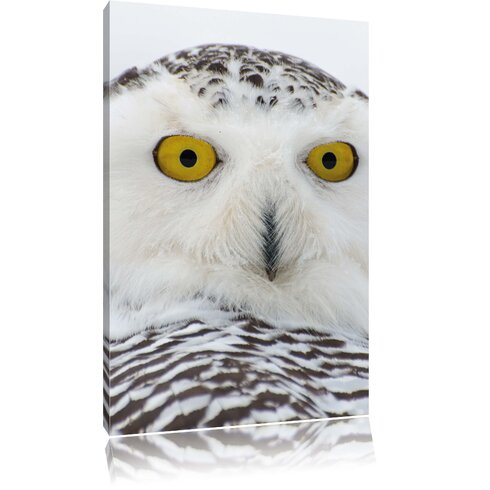 Snow Owl Photographic Print on Canvas