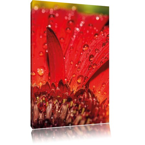 Dew Droplets on Red Flower Photographic Print on Canvas
