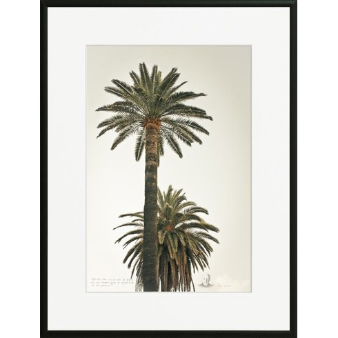 'Great Palms 1' by Philippe David Framed Photographic Print