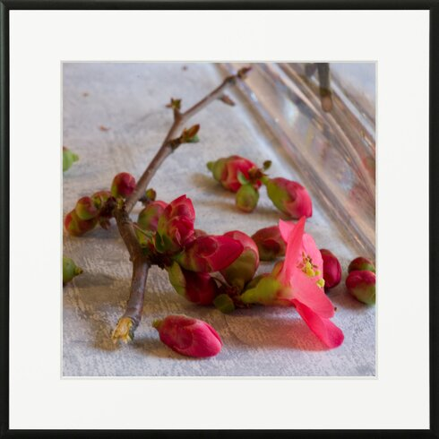 'Quince From Japan 1' by Laurence David Framed Photographic Print