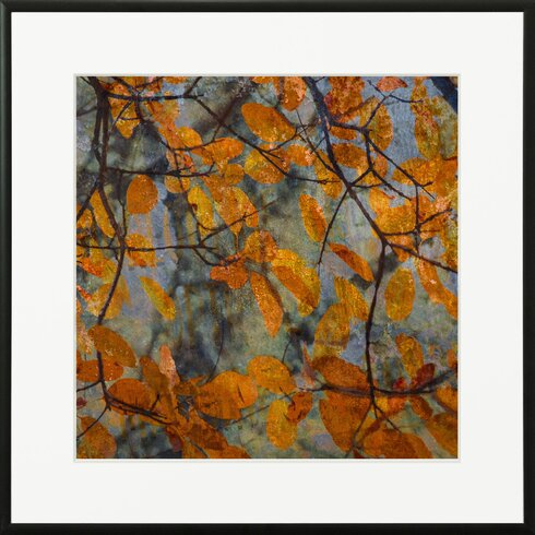 'Golden Foliage' by Laurence David Framed Graphic Art