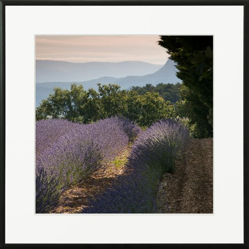 'Lavender Fields 4' by Laurence David Framed Photographic Print