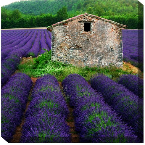 La Lavender Framed Photographic Print on Wrapped Canvas