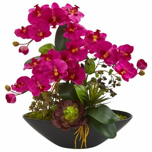 Artificial Phalaenopsis Succulent Garden Orchid and Mixed Floral Arrangement in Vase