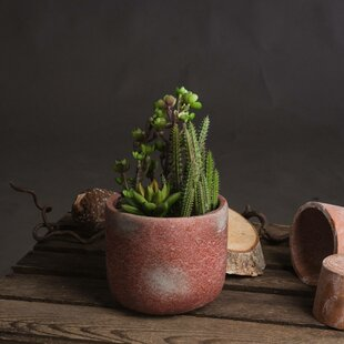 Floor Succulent Cacti Plant In Pot By The Recipe Flowers