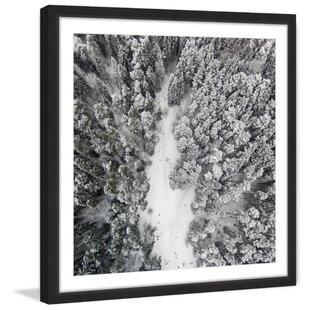 9a76332fa198  Path Among Giants  Framed Photographic Print