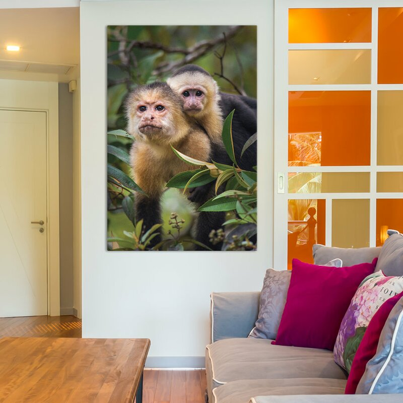 East urban home white throated capuchin monkeys tortuguero limon white throated capuchin monkeys tortuguero limon province costa rica photographic gumiabroncs Image collections
