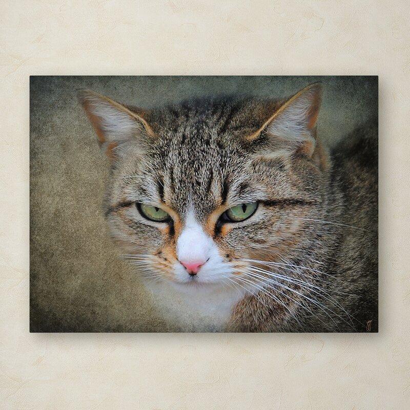 Trademark Art Gray Tabby Cat Portrait Graphic Art Print On Wrapped Canvas Wayfair
