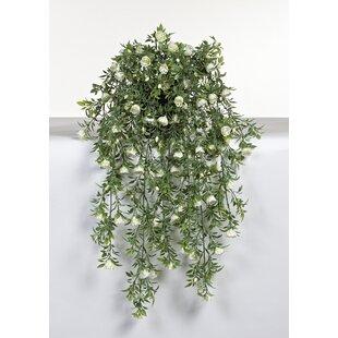 Hanging Flowering Plant In Pot Image