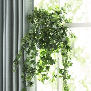 long mini german ivy hanging plant