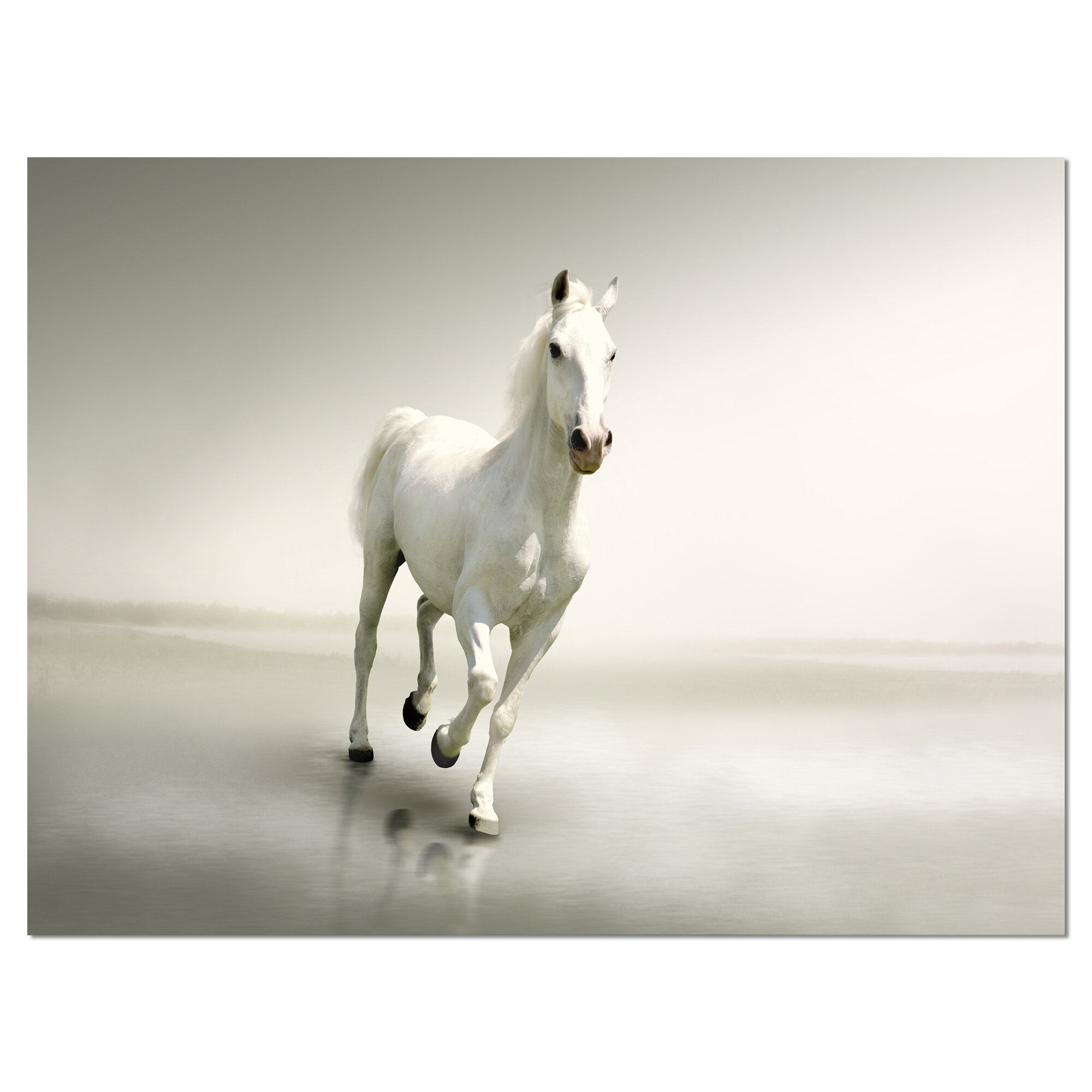 Orren Ellis Beautiful White Horse Running Photographic Print On Wrapped Canvas