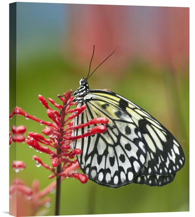 East Urban Home Paper Kite Butterfly Photographic Print On Canvas Wayfair