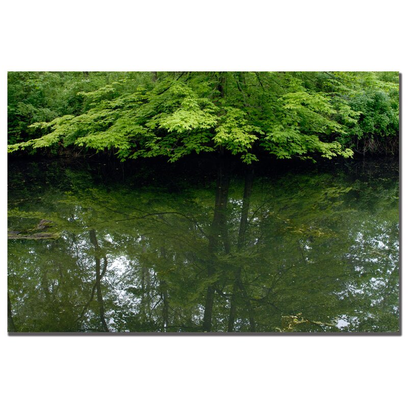 'Maple Marsh Reflections' by Kurt Shaffer Photographic Print on Wrapped Canvas