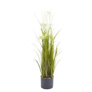 Dandelion Plant In Pot Set (Set Of 2) By The Seasonal Aisle