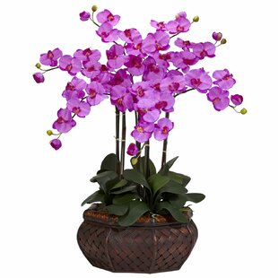 Large Silk Orchids Floral Arrangement in Planter