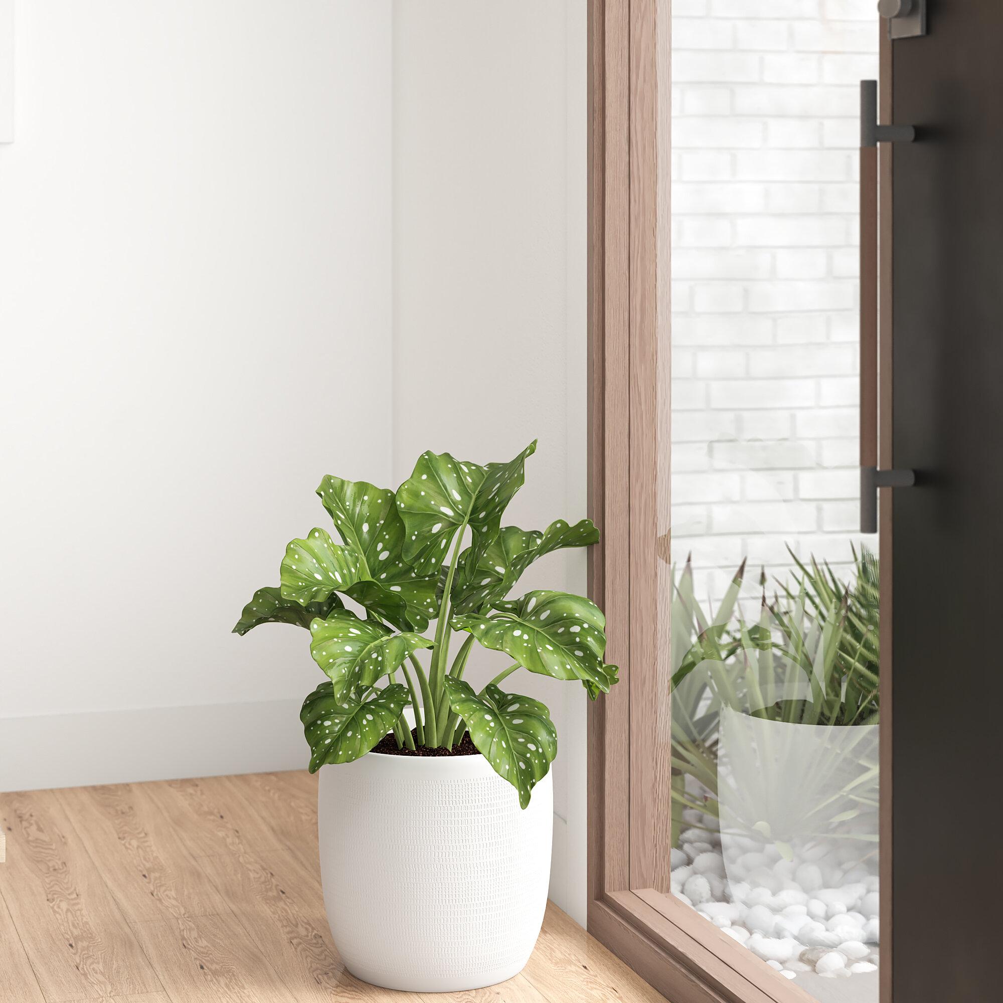 Dunnes Large Embossed Ceramic Pot Planter Reviews Allmodern