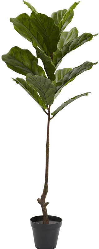 Image of Fiddle Leaf Tree in Pot up to 29% off