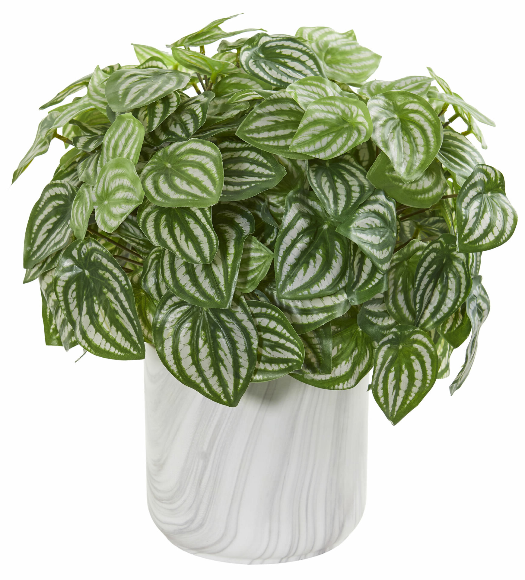 Charlton Home Artificial Peperomia Foliage Plant In Decorative Vase Wayfair