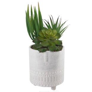 Ceramic Desktop Succulent Plant in Pot