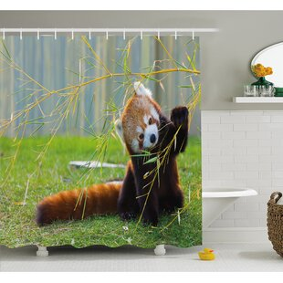 Wildlife Cute Red Panda on the Field Playing with Bamboo Branches Native Himalayas Shower Curtain Set