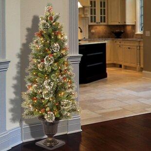 Slim Christmas Trees Youll Love Wayfair