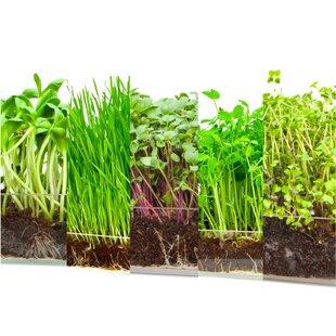 Assorted Microgreen Refill Growing Kit By Window Garden