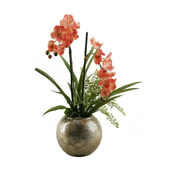 D W Silks Vanda Orchids Floral Arrangement In Planter Wayfair