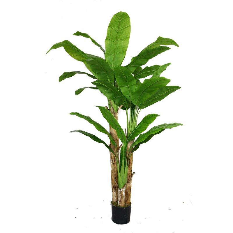 Bayou Breeze Banana Leaf Tree In Pot Reviews Wayfair