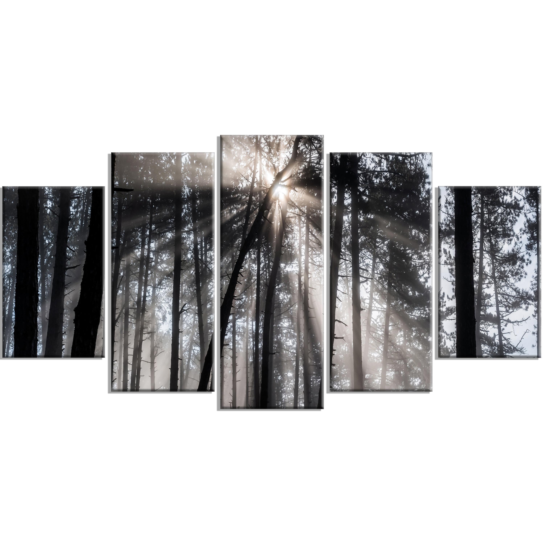 Designart Sunbeams Through Black White Forest 5 Piece Wall Art On Wred Canvas Set Reviews Wayfair