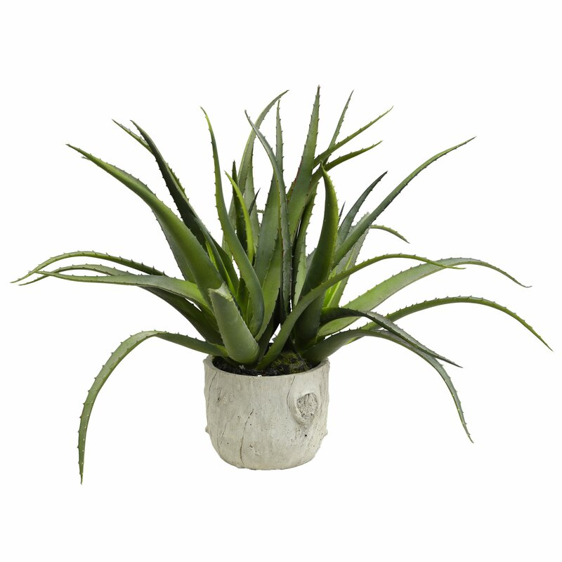 Wrought Studio Aloe Succulent Planter Reviews Wayfair