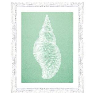 Seashell Framed Art Wayfair
