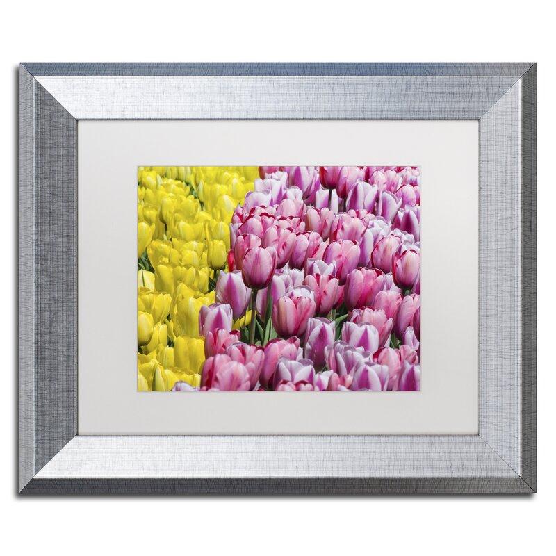 Trademark Art Tulip Heaven By Kurt Shaffer Framed Photographic Print Wayfair